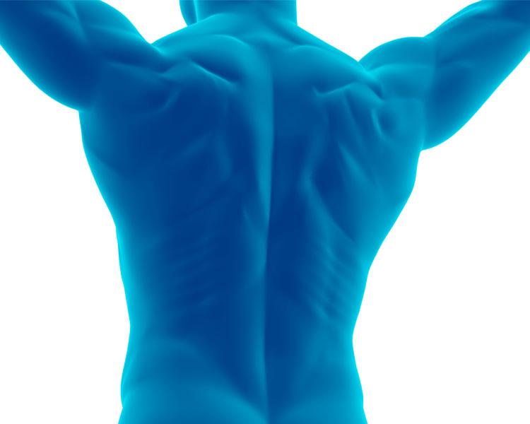 Säulenkraft aus Schultern, Rumpf und Hüften