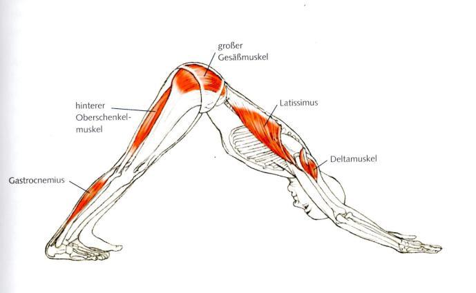 Yoga ist Functional Training - herunterschauender Hund