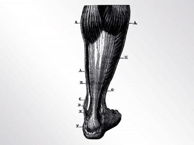 Akute oder chronische Beschwerden an der Achillessehne, Functional Training Magazin, Functional Training