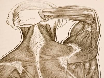 Impingement Syndrom als Ursache für Schulterschmerzen,Functional Training Magazin, Functional Training
