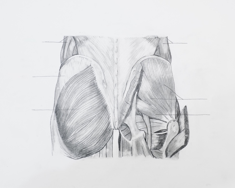 schulterblatt stabilisierende muskulatur