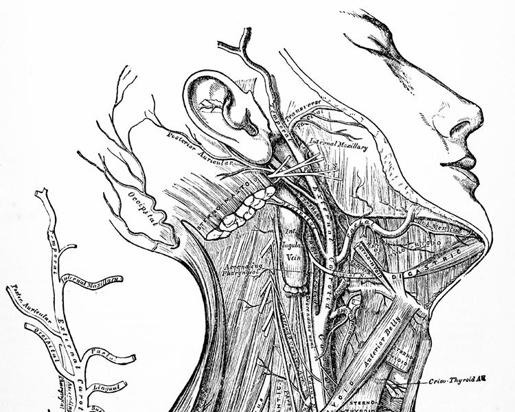 hyperlordose der hws