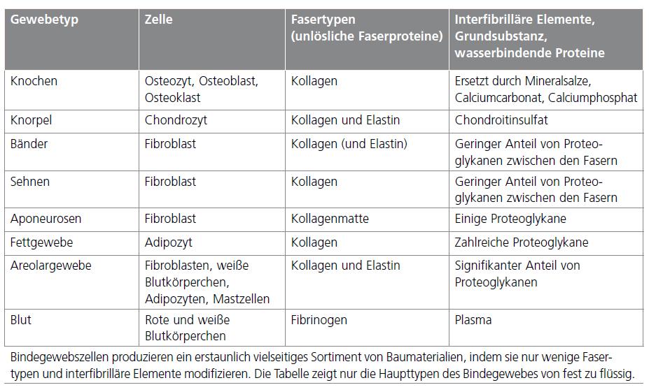 Einführung in das Fasziennetz - Functional Training Magazin ...