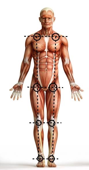Lines Body
