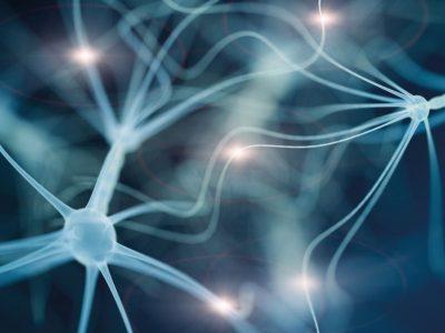 Die Faszien und das Nervensystem