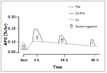 Erhöhte Muskelproteinsyntheseraten (MPS) bis zu 48 Stunden-ftm-3-2020
